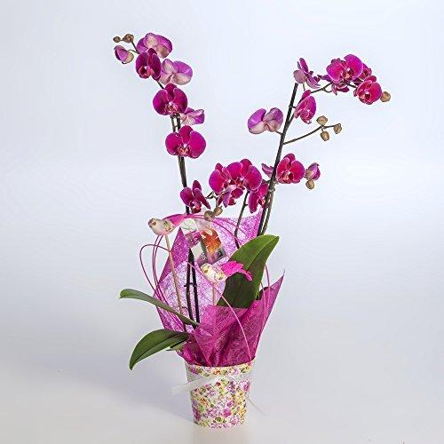 planta-natural-orquidea-morada