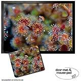 Set: 1 Fußmatte Türmatte (70x50 cm) + 1 Mauspad (23x19 cm) - Blumen, Sonnentau, Fleischfressende Schönheit