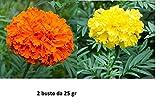2 Buste semi Tagete nano giallo e arancio a fiore doppio