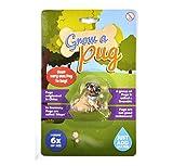 """Spielzeug """"Grow A Pug"""" mit wachsendem Mops"""