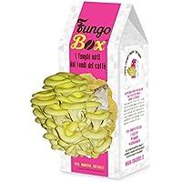 FungoBox: il Kit per Coltivare in Casa Funghi Ostrica buoni e sostenibili dai Fondi di Caffè – per Donna – Idea regalo - Festa della Mamma – Regali per lei – Festa della Donna (Bianco e Rosa)
