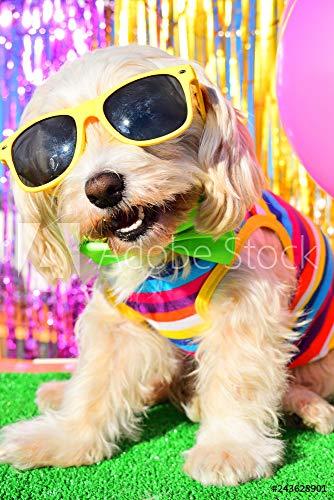 otiv: Happy Party Dog #243628901 - Bild auf Forex-Platte - 3:2-60 x 40 cm / 40 x 60 cm ()