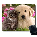 Grey Baby Cat, golden Dog, golden Puppy, Together with a Cute Mouse Pad.