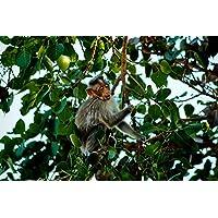 Amazones Mono Para Bebe últimos 30 Días Juguetes Y Juegos
