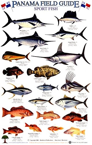 Panama Sport Fish Identification Guide (Laminated Single Sheet Field Guide) (English and Spanish Edition)