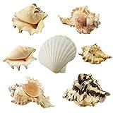 GK 1kg Beach Mixed Sea Shells Shell Craft Table Decor acquario wedding