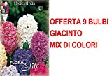 OFFERTA 9 BULBI GIACINTO GARDEN MIX DI COLORI BULBS profumati