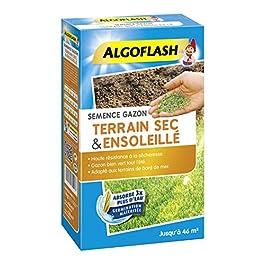 ALGOFLASH Semences Gazon Terrain Sec Ensoleillé