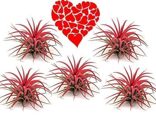 De Madres Día, Día San Valentín Flores, Mamá