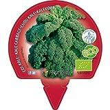 Col Kale - 6 unidades - Alveolos - ECO