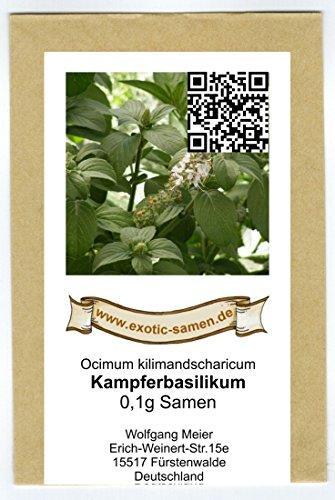 Kampferbasilikum - Ocimum kilimandscharicum - Gewürz- u. Heilfpflanze - 0,1 g