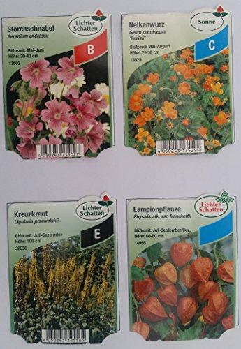 OBI Bodendecker Blumensamen
