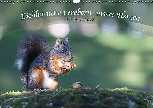 Preisvergleich Produktbild Eichhörnchen erobern unsere Herzen (Wandkalender 2017 DIN A3 quer): Mit der Planerfunktion ideal für die ganze Familie. (Geburtstagskalender, 14 Seiten ) (CALVENDO Tiere)