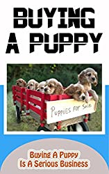 Buying A Puppy: Buying A Puppy Is A Serious Business