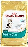 Royal Canin Katzenfutter Feline Kitten Maine Coon 36, 4 kg, 1er Pack (1 x 4 kg)