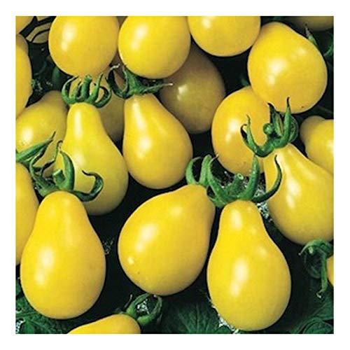 Gelbe, birnenförmige Mini-Tomate - gelbes Birnchen - yellow Pear - 20 Samen
