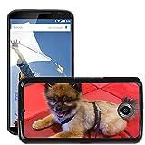 Print Motif Coque de protection Case Cover // M00126180 Enano perro Spitz Pomeranian Pom Pom // LG Google Nexus 6