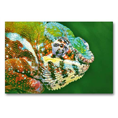 Calvendo - Tela in Tessuto di Alta qualità, 90 x 60 cm, Trasversale, Colore: meraviglia: Ritratto di Una Splendida pantherchamäleons Colorata, Immagine su Telaio a Cunei (Furcifer pardalis) Animali