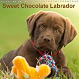 Sweet Chocolate Labrador (Wall Calendar 2018 300 × 300 mm Square): Chocolate labrador puppy 9 weeks old (Monthly calendar, 14 pages ) (Calvendo Animals) [Kalender] [Apr 01, 2017] Schiller, Petra