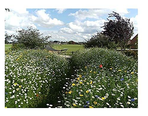 100-% Traditionelle Wildblumen-Wiesen-Samenmischung. 90 Gramm. Heimischer Samen MeadowMania. Bedeckt bis zu 30 Quadratmeter