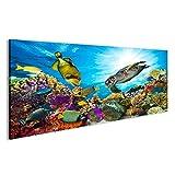 islandburner Bild auf Leinwand Wandbild Leinwandbild Bilder Poster Buntes Korallenriff mit vielen Fischen und Meeresschildkröten Wandbild, Poster, Leinwandbild