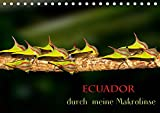 Ecuador durch meine Makrolinse (Tischkalender 2019 DIN A5 quer): Makroaufnahmen aus Ecuador (Monatskalender, 14 Seiten ) (CALVENDO Tiere)