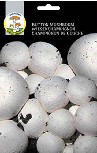 Funghi Mara Buprab Micelio, Bianco