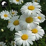 Acquista piretro semi di fiore 120pcs piante Insettifugo Fiore Piretro