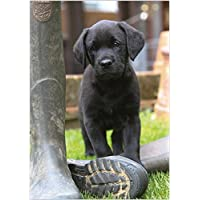 Photographic Greeting Card (ABA1867) - Blank/Birthday - Black Labrador Retriever Puppy - Wellington Boot - Paw Prints Range