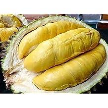 GEOPONICS 10Durian Fresca, Durio zibhinus, Rey de la Fruta RARA Elemento tailandesa Fruta