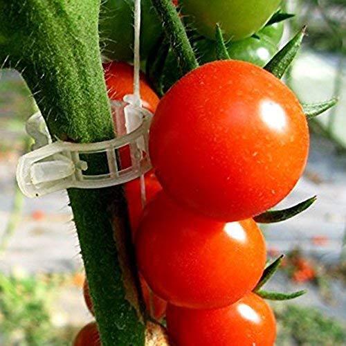 Zoom IMG-5 alixin clip per piante cantaloupe