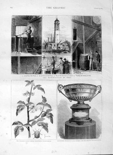 1875-tasse-du-scarabee-de-pomme-de-terre-darmes-de-tir-de-fabrication-rugy