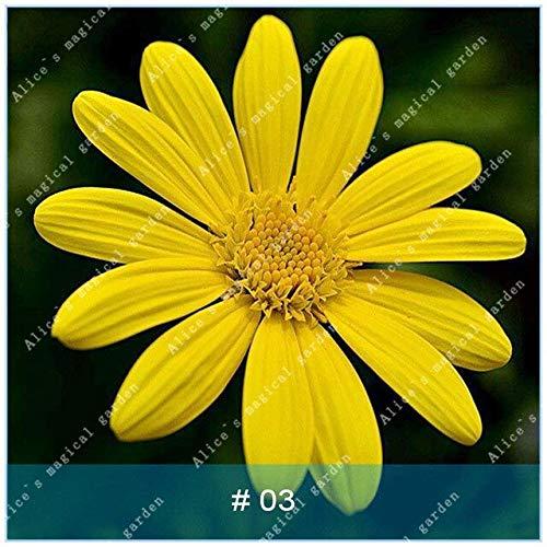 geoponics semi: zlking 100 pz gerbera varietà di colori bonsaïpianta famiglia flower garden facile da coltivare regalo bellissimo: 3
