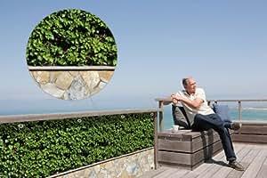 myfence Balkonsichtschutz mit Motiv: Felix und Julietta als Blickschutzin der Größe 1000 cm x 120 cm wie Blickschutz auf Vollplane