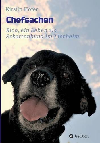 chefsachen-rico-ein-leben-als-schattenhund-im-tierheim