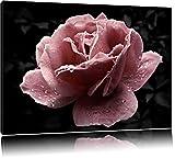 Dark zarte rosafarbene Rosenblüte schwarz/weiß auf Leinwand, XXL riesige Bilder fertig gerahmt mit Keilrahmen, Kunstdruck auf Wandbild mit Rahmen, günstiger als Gemälde oder Ölbild, kein Poster oder Plakat