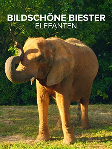 Bildschöne Biester Elefanten
