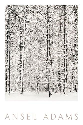 The Picture Peddler Inc. Pine Forest im Schnee, Yosemite National Park Ansel Adams Schwarz & Weiß geprägt Print 61x 91,4 -
