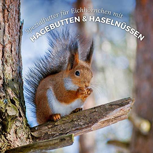 AniForte Wildlife Premium Eichhörnchenfutter 1 kg für Eichhörnchen und Streifenhörnchen – Naturprodukt Mischung, Besondere und artgerechte Eichhörnchen Fütterung – Unsere Spezial Futtermischung - 6
