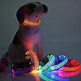 #2: Purple Dog Led Collar Fancy Pet Collar Blue Tiger Printed Colour (Medium)