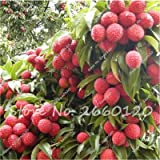 Fresh Lychees - Best Reviews Guide