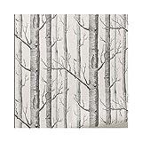 JDUNR Wallpaper Schwarz-Weiße Birken-Baum-Tapete Für Schlafzimmer-Wohnzimmer-Wand-Papierrolle Rustikale Waldholz-Tapeten, 5 Quadratmeter