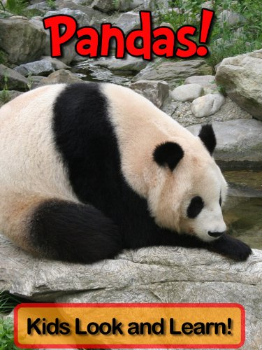 pandas-learn-about-pandas-and-enjoy-colorful-pictures-look-and-learn-50-photos-of-pandas