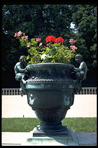 Versailles Urn (346052 Urn With Fauns And Begonias Versailles France A4 Photo Poster Print 10x8)