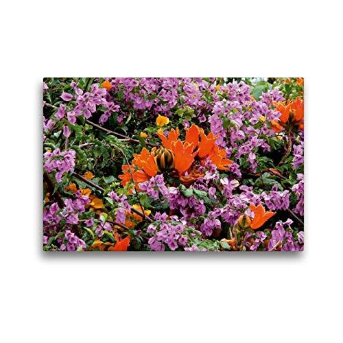 Calvendo Premium Textil-Leinwand 45 cm x 30 cm quer, Afrikanischer Tulpenbaum (Spathodea campanulata) | Wandbild, Bild auf Keilrahmen, Fertigbild auf echter Leinwand, Leinwanddruck Natur Natur