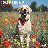 Golden Retriever Traditioneller Kalender 2020