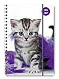 Collegetimer Cat 2016/2017 - Schülerkalender A5 - Weekly - Ringbindung - 224 Seiten