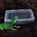 Greenlans Reptile Futter und Wasser Dish Futternapf Trinken Futternapf für Schildkröte Reptile Spider Schlange