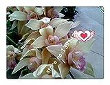 21 Farben 100 Stück Cymbidium Samen, Rare Jahreszeiten Bonsai Orchidee Samen, Topfpflanzen, blaue Blumen für Haus & Garten,