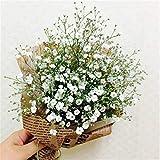 Garten Gypsophila Blumen Samen Gypsophila Repens Teppich-Schleierkraut 50 Samen mehrfarbig (Weiß)